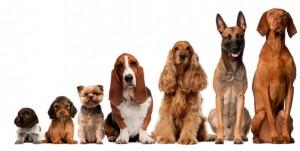 aromathérapie pour chiens