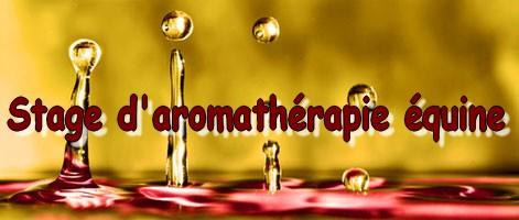 stage d'aromathérapie équine