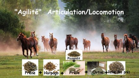Articulation locomotion